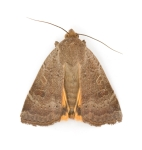 Moth Photo credit: carpetcleaningottawa.com/wp-content/uploads/2013/10/Moth-Photos.jpg